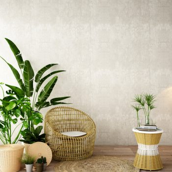Tropical Plants   Tips and Tricks for Tropical Plants   Learn How to Care for Tropical Plants   Tropical Plant Hacks   Tropical Plant Tips and Tricks
