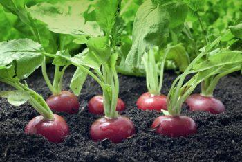 Best Friends | Plants | Plants that are Best Friends | Gardening | Gardening Tips and Tricks | Gardening Hacks | Garden Plants | Gardening