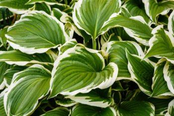 Problem-Solving Plants | Plants that Solve Problems | Gardening Tips and Tricks | Garden | Garden Hacks | Plant Hacks | Plant Tips and Tricks