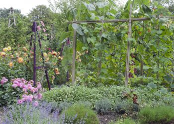 Best Friends   Plants   Plants that are Best Friends   Gardening   Gardening Tips and Tricks   Gardening Hacks   Garden Plants   Gardening
