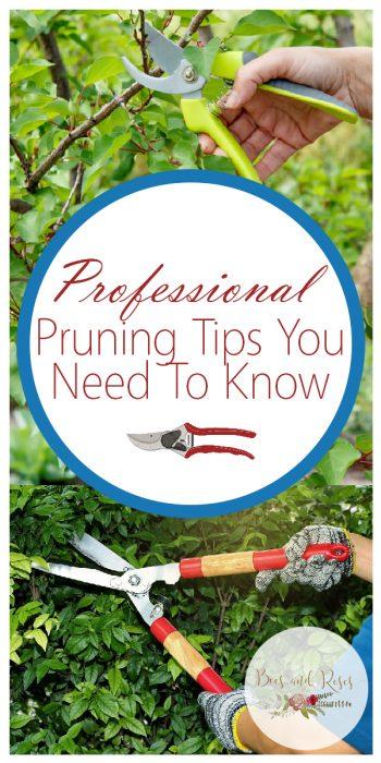 best time to prune   prune   gardening   garden   prune your garden   pruning tips   tips and tricks   pruning