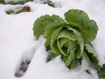 Almanac   Gardener's Almanac   Monthly Almanac   Tips and Tricks for Gardening in Winter   Winter Gardening Hacks   Gardening in January   Tips and Tricks for Gardening in January
