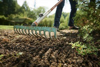 gardening | gardening wish list | plan | wish list | garden