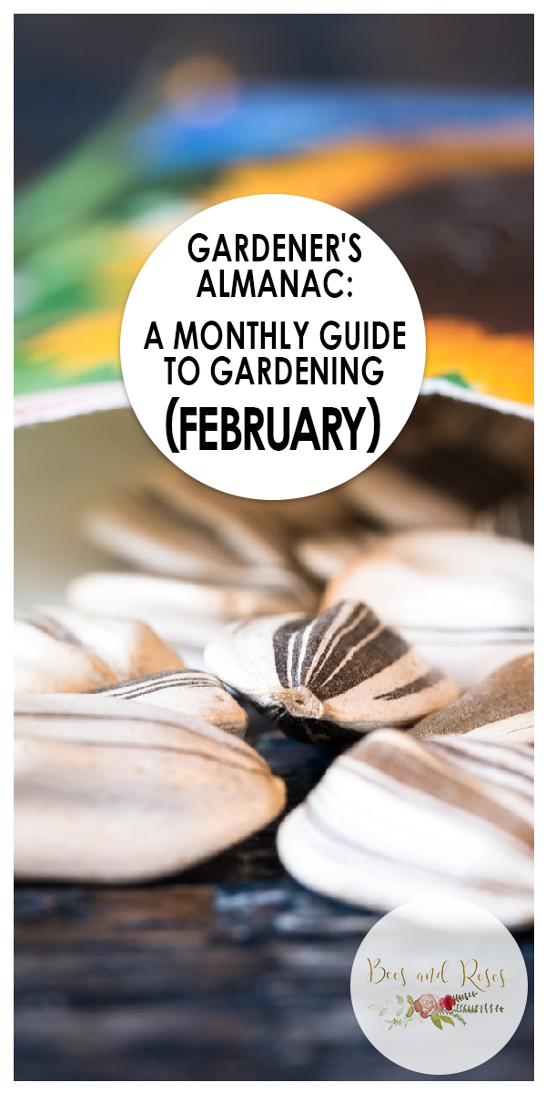 February | February gardening | gardening in February | gardening | garden | winter gardening | winter | easy gardening in February