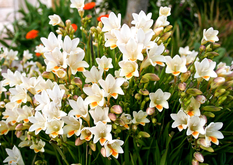 bulbs   spring   gardening   spring gardening   bulbs to plant in spring   garden   flowers   groundcover
