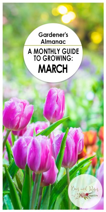 March | Gardener's Almanac | Gardener's Tips | Gardening Tips | Yard Care | Garden Care | Things To Do In March | Gardening In March
