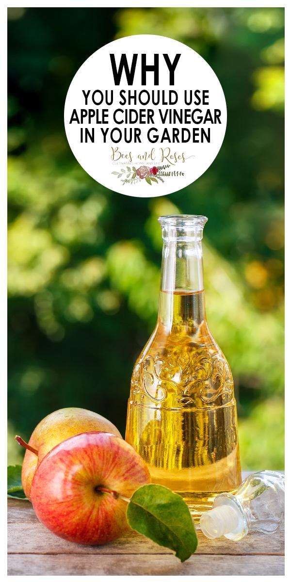 apple cider vinegar   vinegar   garden   ph levels   cleaner   pesticide   natural pesticide   fertilizer   natural fertilizer   garden fertilizer