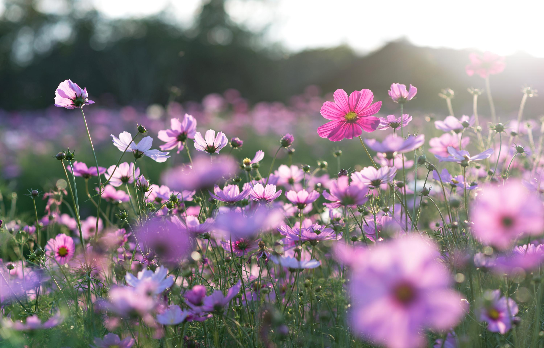 april | april gardening tips | garden | gardening tips | spring | gardener's almanac | guide to gardening