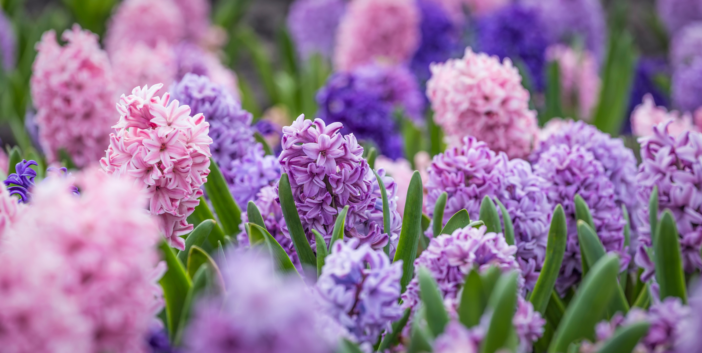 pollinators   plants that attract pollinators   nectar   nectar plants   garden   flowers   bees   pollen