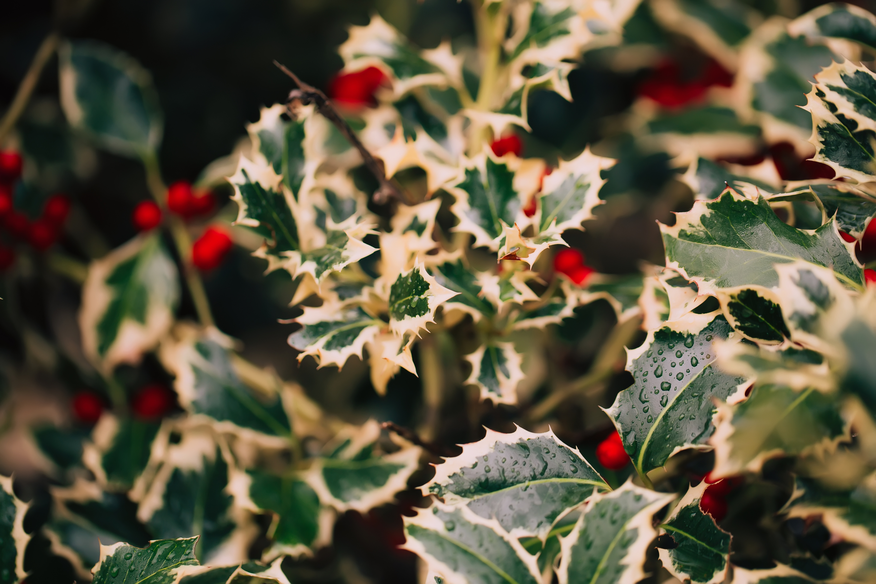 Deer Resistant Shrubs For Shade Bees And Roses