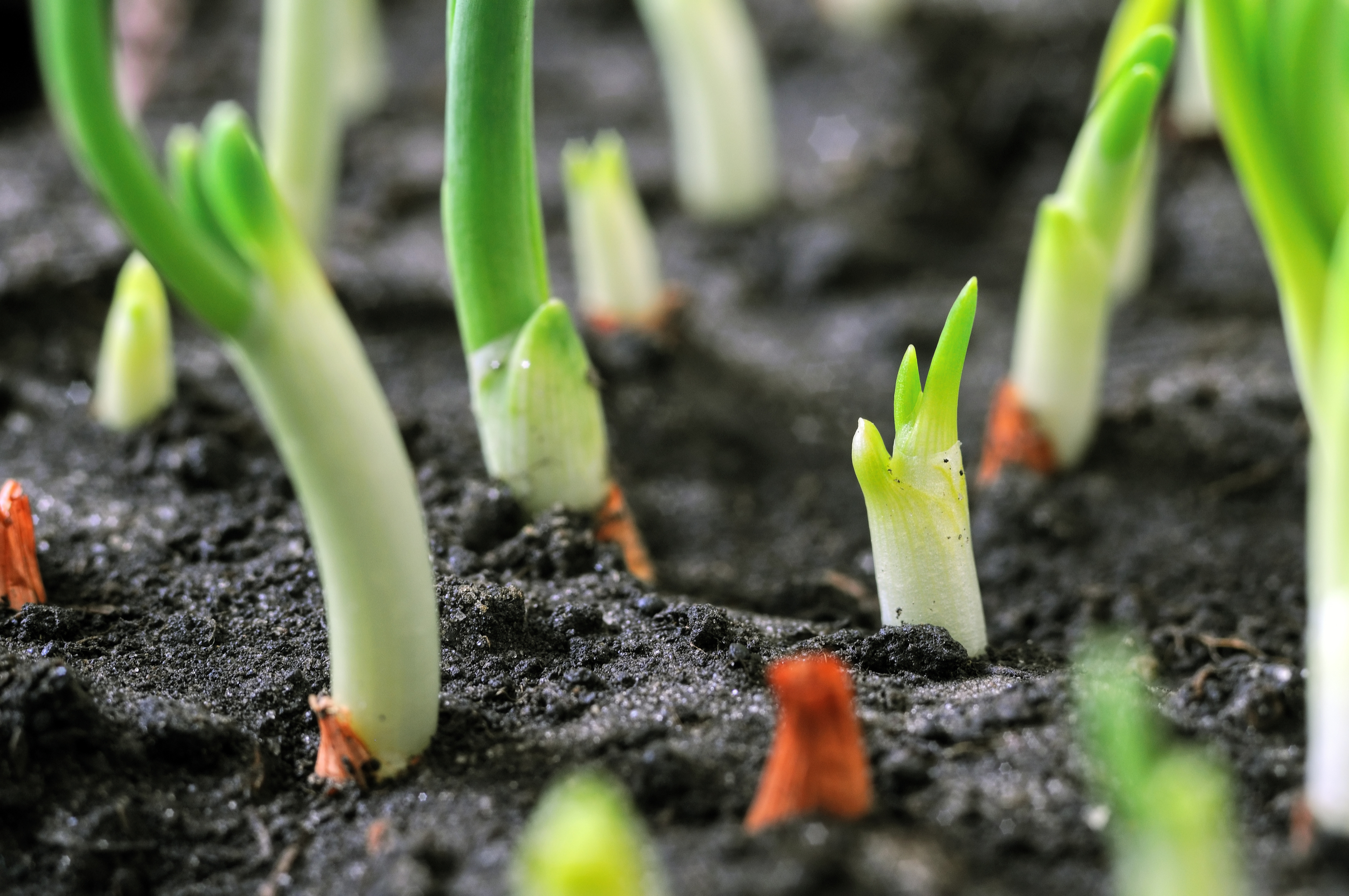 april   april gardening tips   garden   gardening tips   spring   gardener's almanac   guide to gardening
