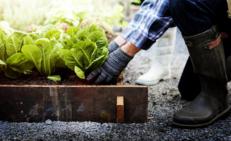 companion planting | companion gardening | gardening | garden | things to plant together | garden | gardening tips | gardening tips