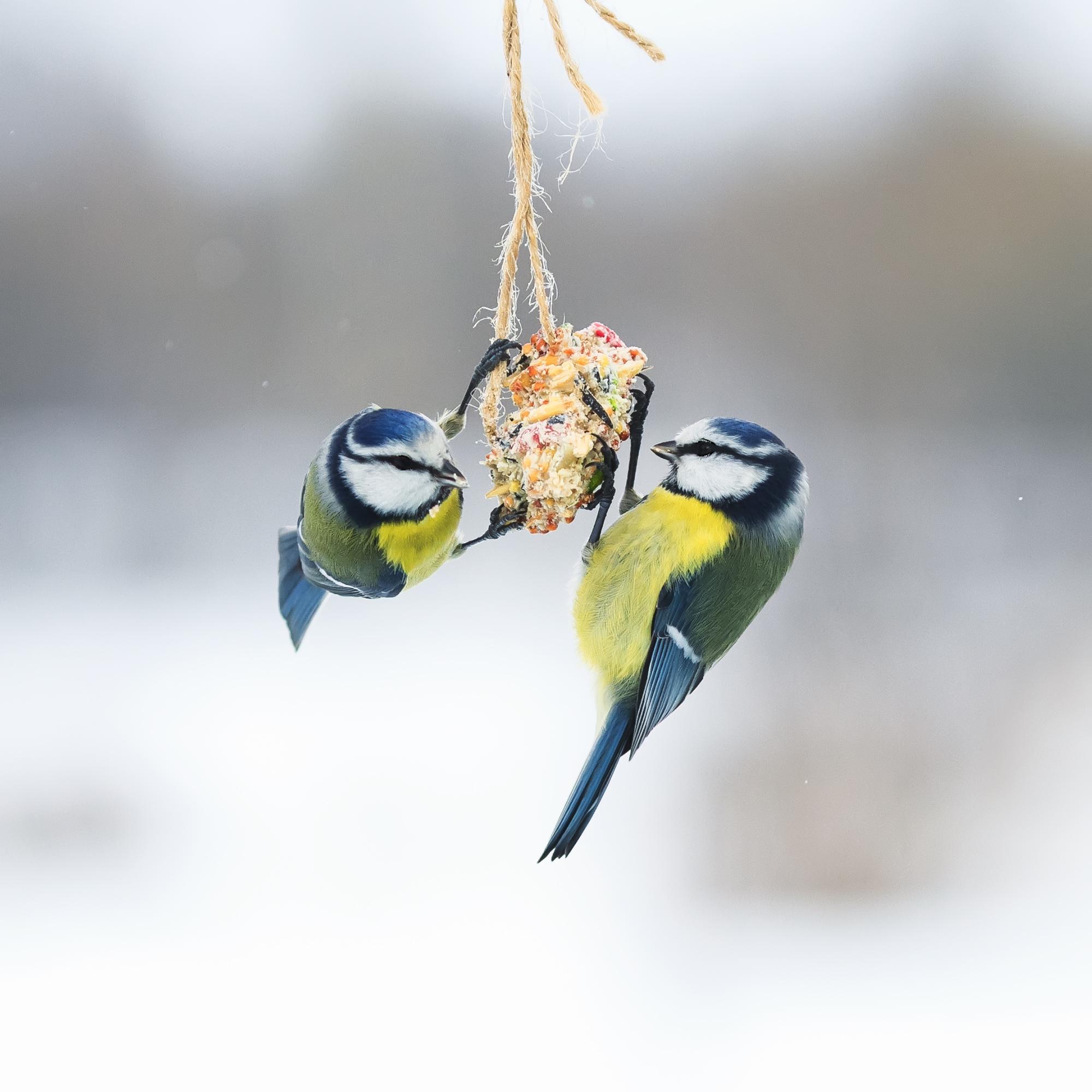 wreath | bird feeder | bird feeder wreath | diy bird feeder | diy bird feeder wreath | feed | bird | diy | yard