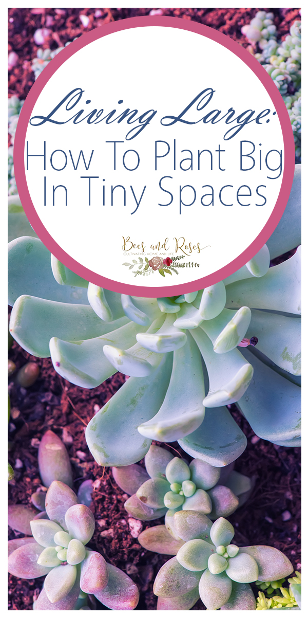 tiny spaces | small garden | garden | gardening | how to | how to plant big in tiny spaces | big impact flowers | flowers with big impact | flowers
