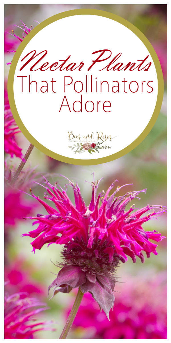 pollinators | plants that attract pollinators | nectar | nectar plants | garden | flowers | bees | pollen