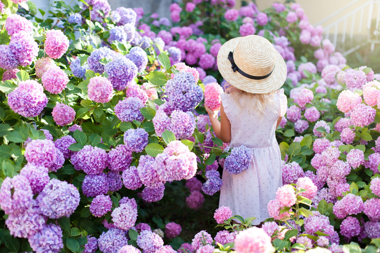 cutting | cutting garden | garden | gardening | garden tips | gardening tips | cutting edge garden | tips and tricks