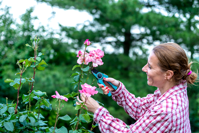 cutting   cutting garden   garden   gardening   garden tips   gardening tips   cutting edge garden   tips and tricks