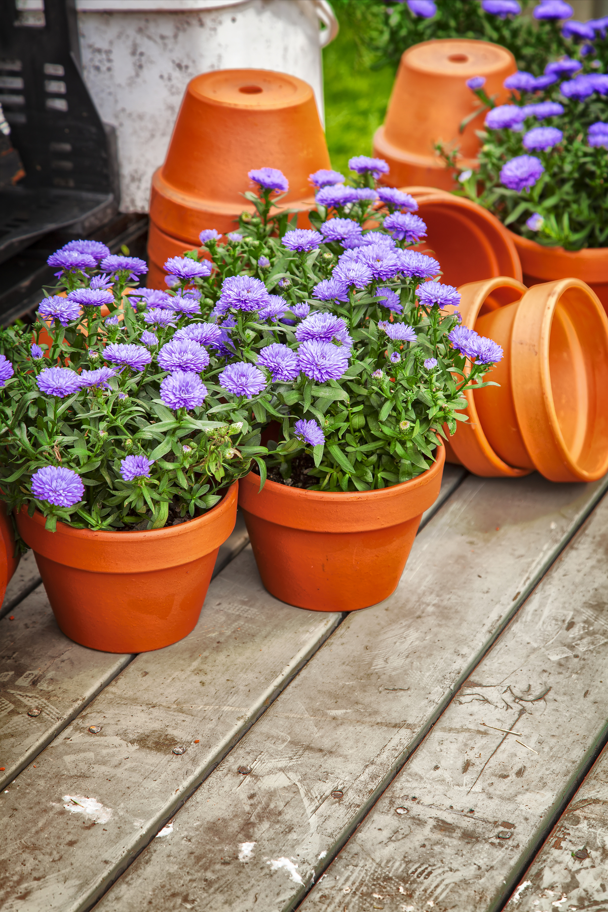 perennials | flower | porch | planters | perennials for planter | container gardening | gardening | garden | porch planters