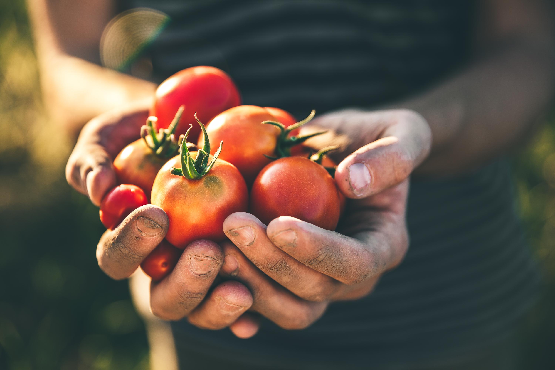edible garden | edible garden ideas | garden | garden ideas | veggies | vegetables | gardening | recipes | garden recipes