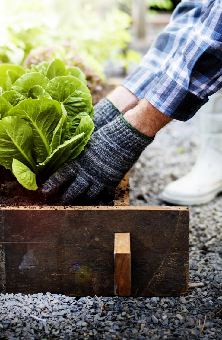 gardener | dirty gardening | dirty gardener | soil | bacteria | gardening | gardening tips | garden | garden tips | compost