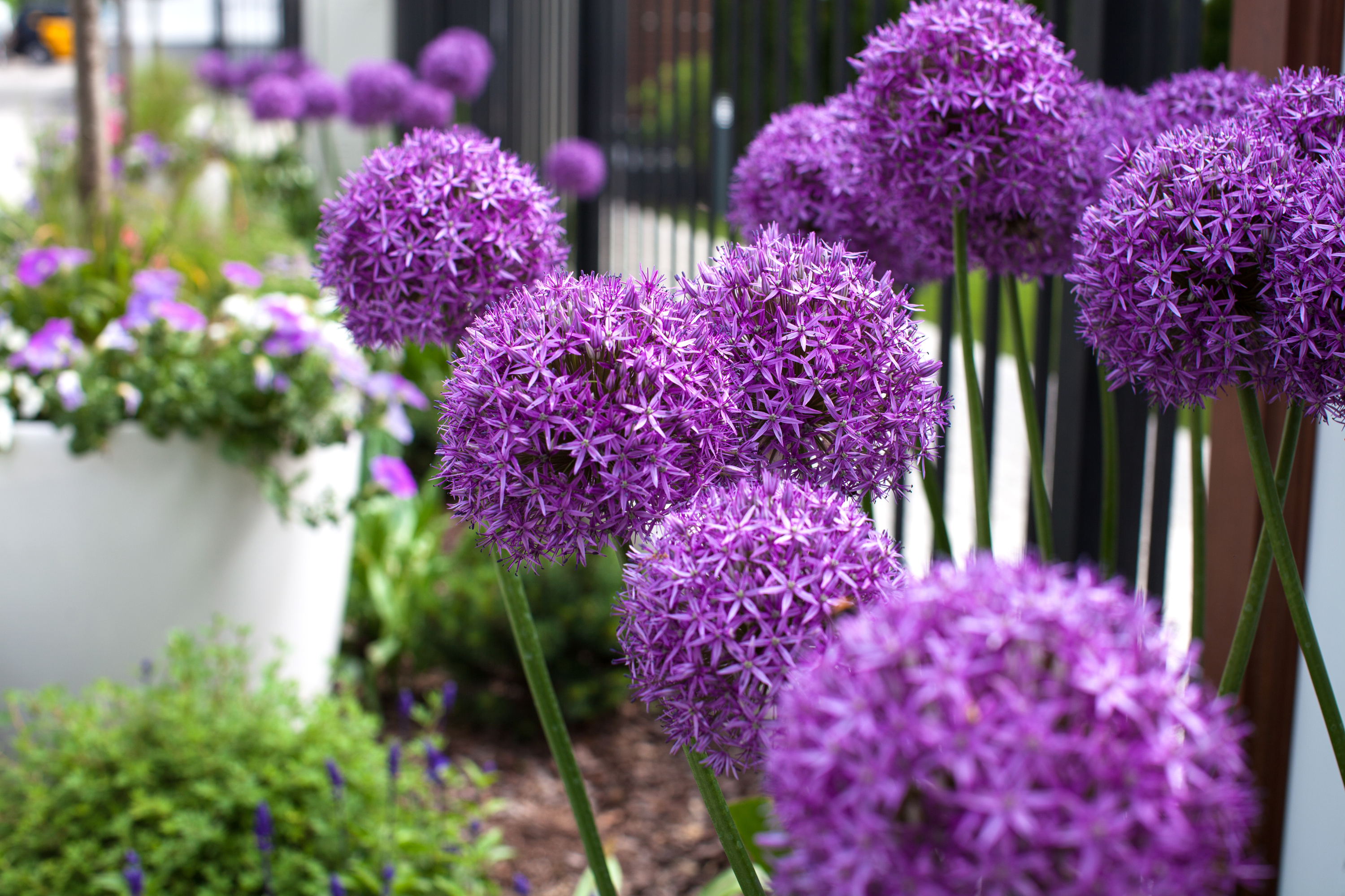 big flowers | flowers | garden | flower ideas | garden ideas | gardening | big impact flowers
