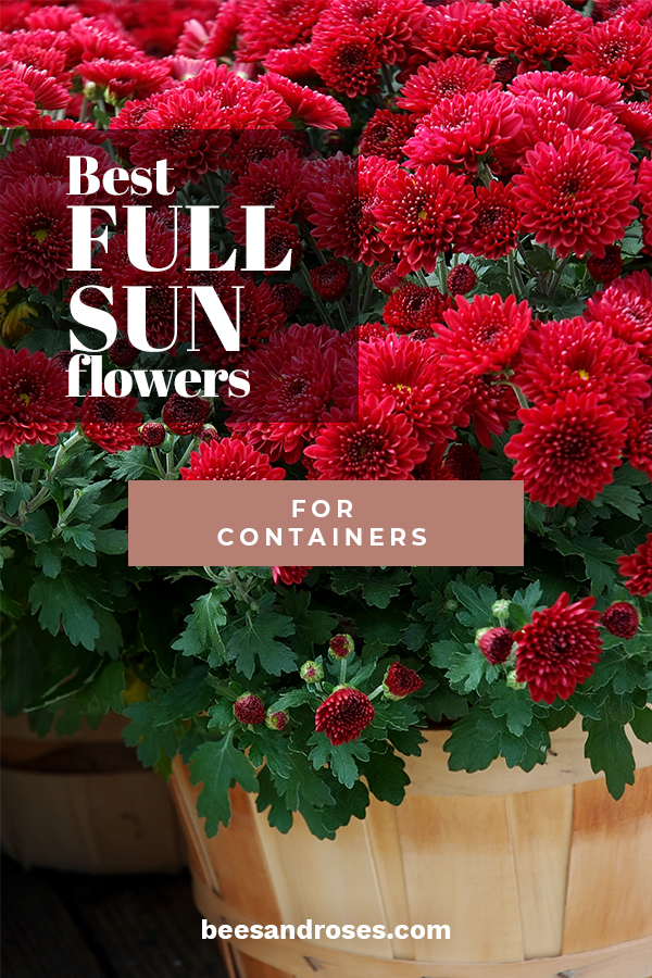 Best Full Sun Flowers For Containers Bees And Roses