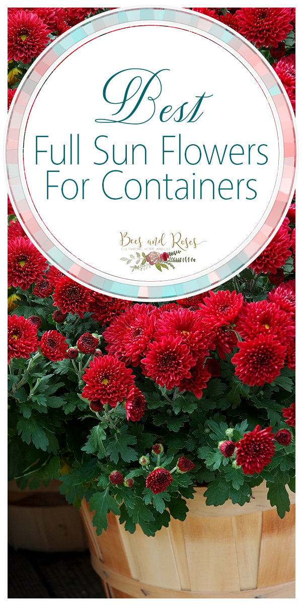 full sun flowers for containers | containers | container gardening | flowers for containers | flowers | full sun flowers | garden | gardening