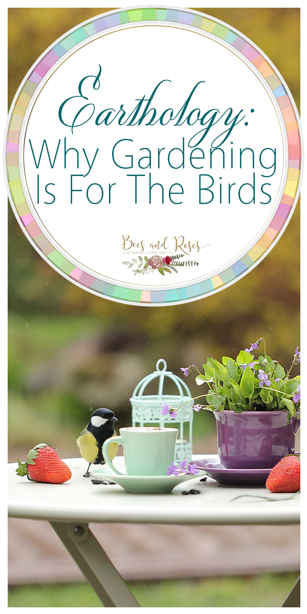 birds | birds in the garden | backyard | backyard birds | garden | gardening | birds in the yard | yard