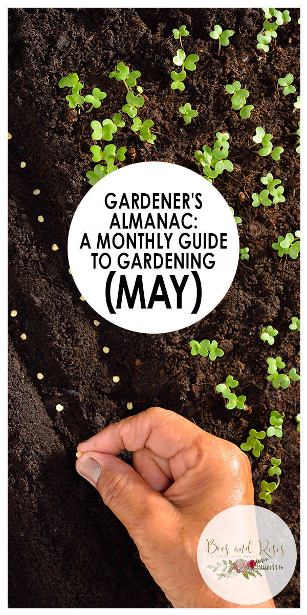may | gardening | garden | gardening tips for may | gardening tips | tips for the garden | tips and tricks for gardening | tips for gardening in may