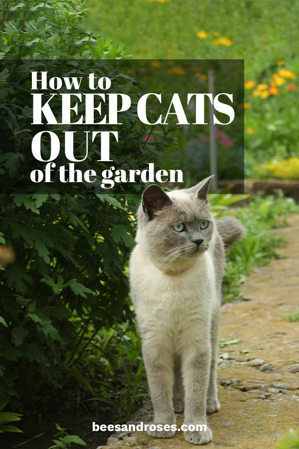 How to Keep Cats Out Of The Garden ~ Bees and Roses