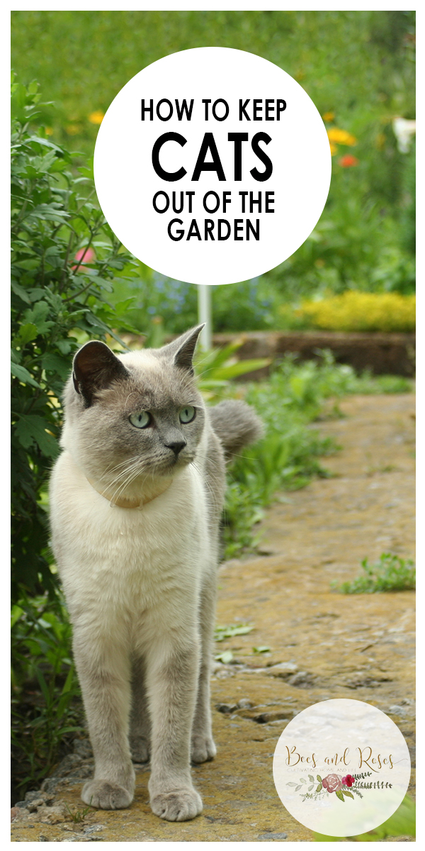 keep cats out of the garden | how to | how to keep cats out of the garden | garden | gardening tips | garden tips | gardening | pest repellent | cat repellent