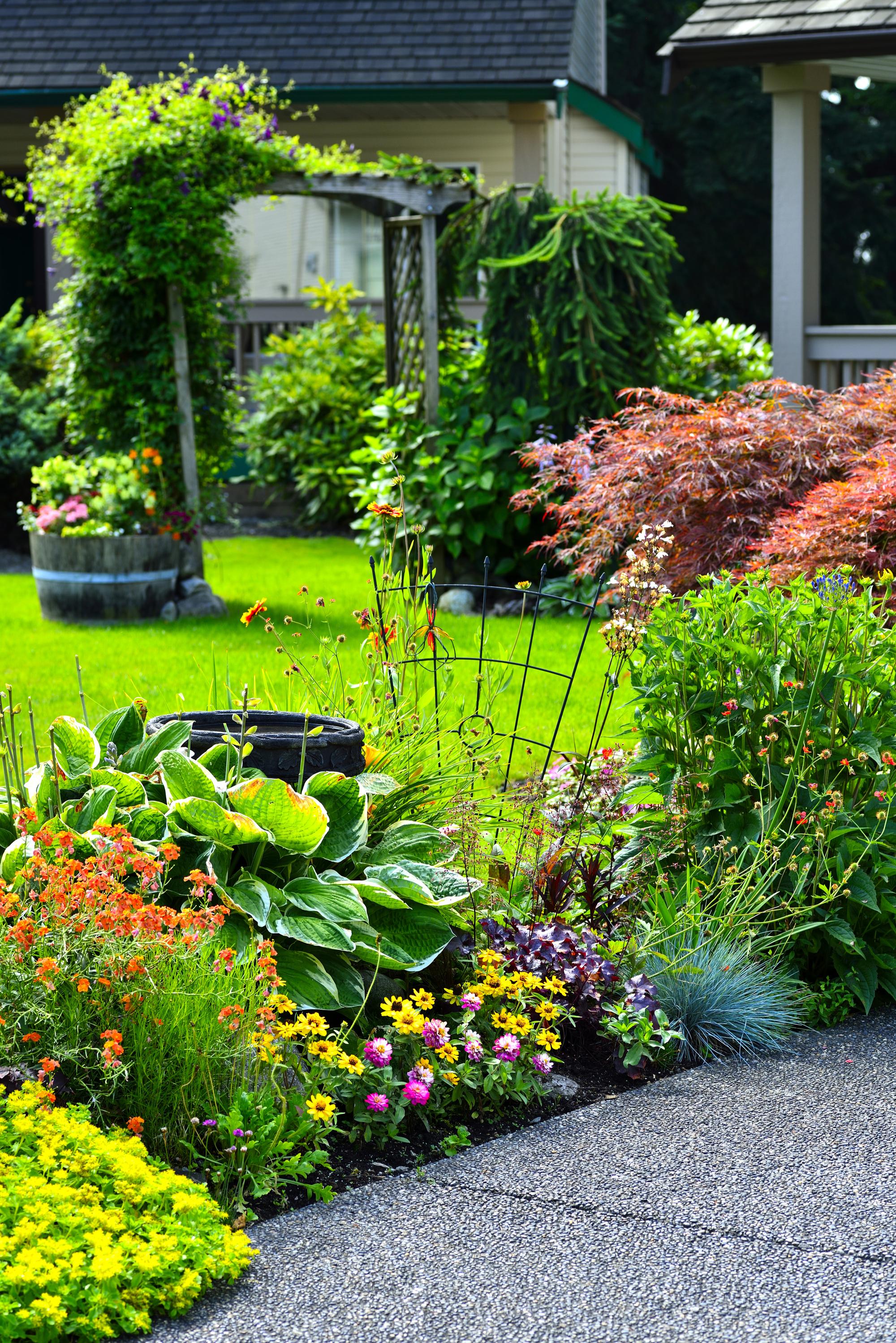 june | garden | gardening | june gardening tips | gardening tips | tips for gardening in june | june gardening