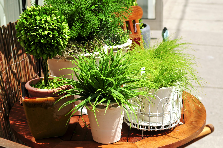may   gardening   garden   gardening tips for may   gardening tips   tips for the garden   tips and tricks for gardening   tips for gardening in may