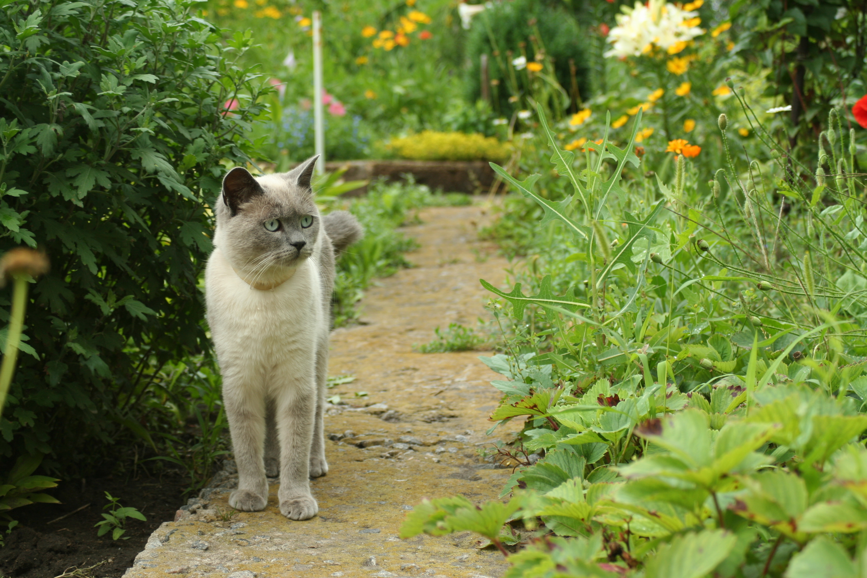 keep cats out of garden
