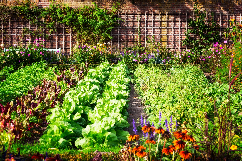 cat-free garden