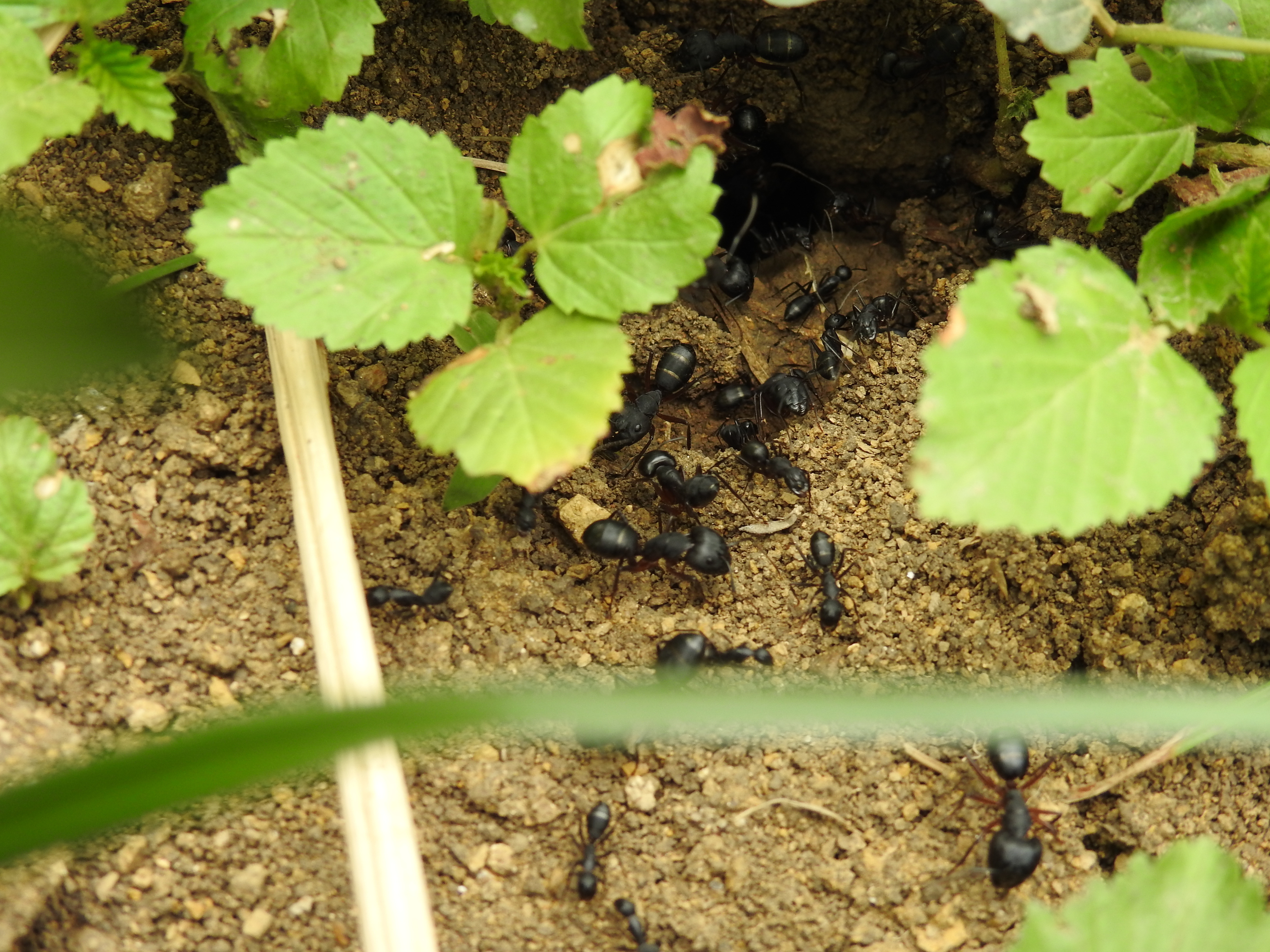 pests | nests | pests and their nests | gardening | garden | gardening tips | tips and tricks | tips and tricks for gardening
