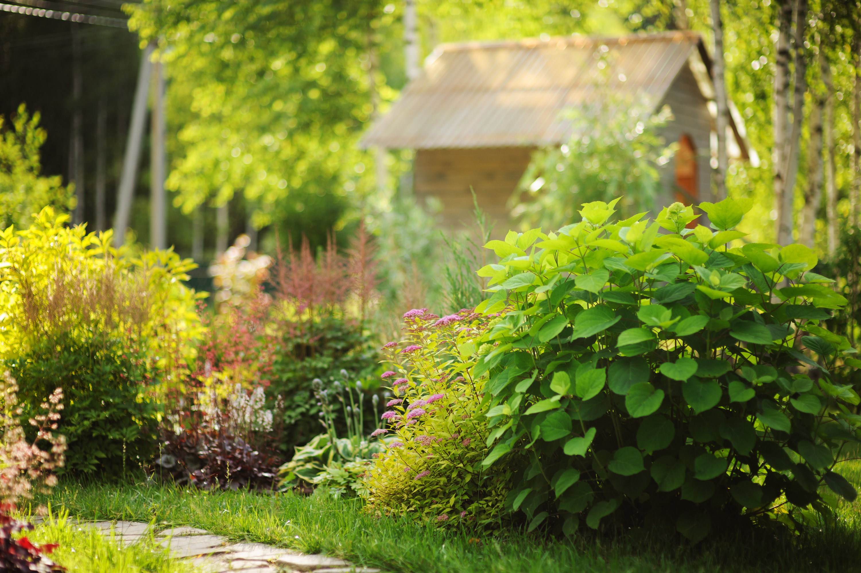 june   garden   gardening   june gardening tips   gardening tips   tips for gardening in june   june gardening