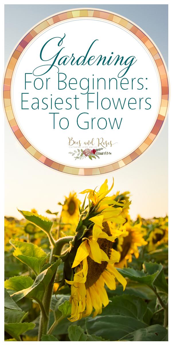 easiest flowers | easiest flowers to grow | gardening | gardening for beginners | garden | flower gardening | flowers | easy flowers