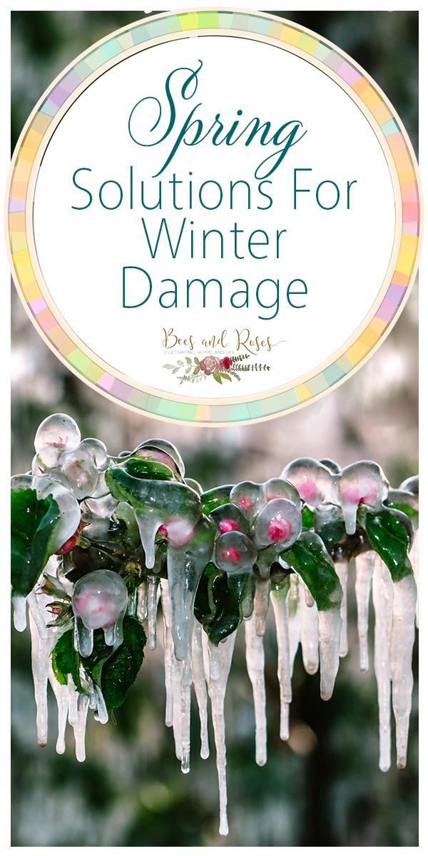 winter damage | spring solutions | damage | winter | spring | garden | garden solutions | spring solutions for winter damage | gardening tips
