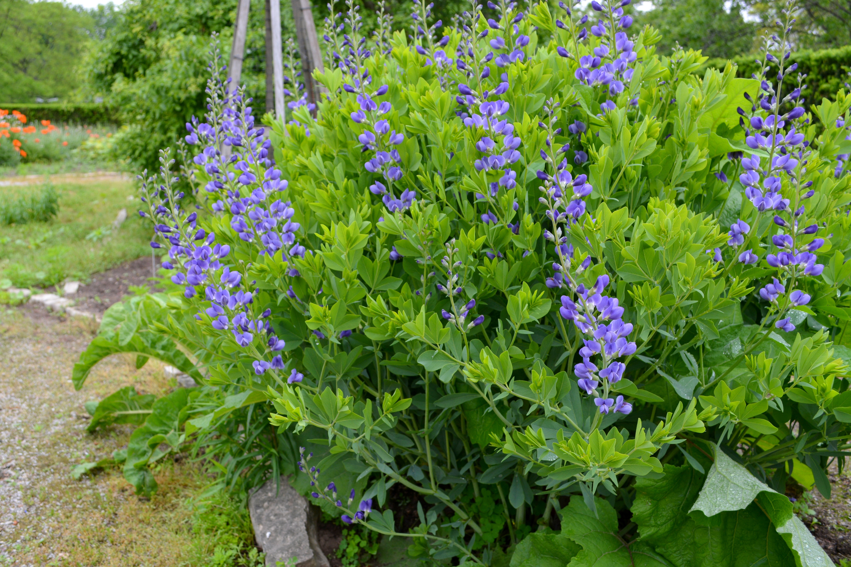clay | plants that thrive in clay | plants | plants that do well in clay | plants for clay | plant ideas | gardening | garden | garden ideas