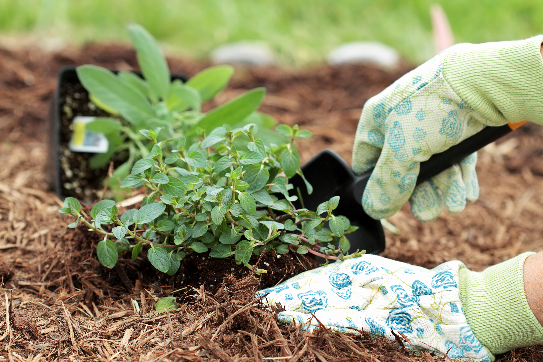 July | gardening tips | gardening tips for July | tips for gardening in July | July gardening tips | garden | gardening | tips and tricks