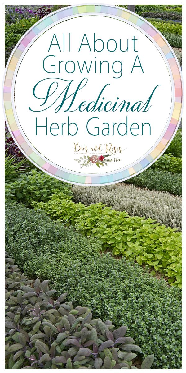 medicinal herb garden | growing a medicinal herb garden | garden | herb garden | medicinal garden | medicinal herbs | how to