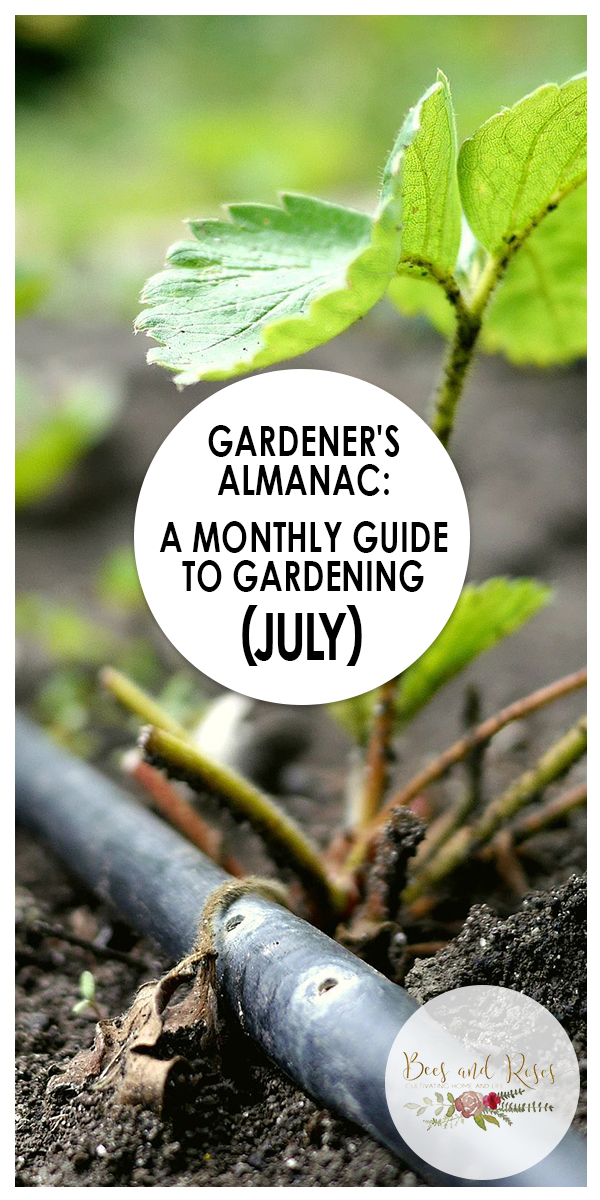 July | gardening tips | gardening tips for July | tips for gardening in July | July gardening tips | garden | gardening | tips and tricks