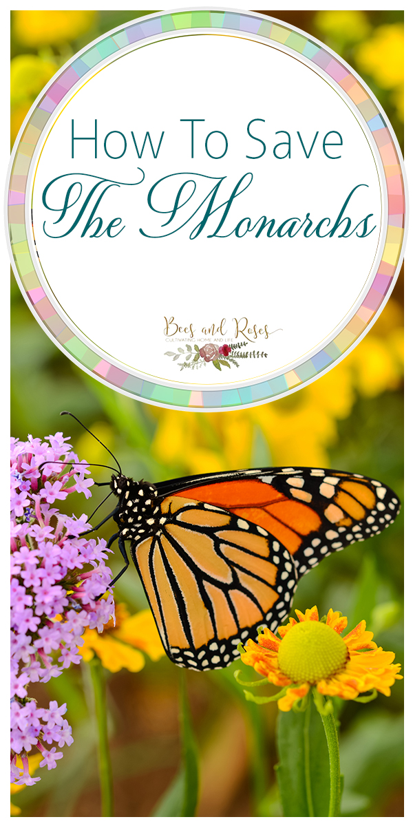 monarchs | how to | how to save the monarchs | butterflies | migration | ecosystem | butterfly migration