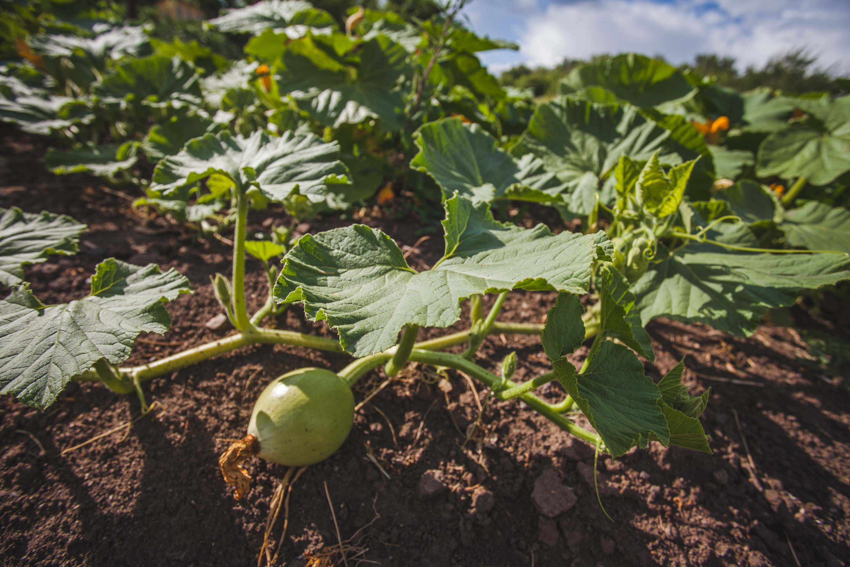 August | gardening | garden | garden tips | gardening in August | fall | fall gardening