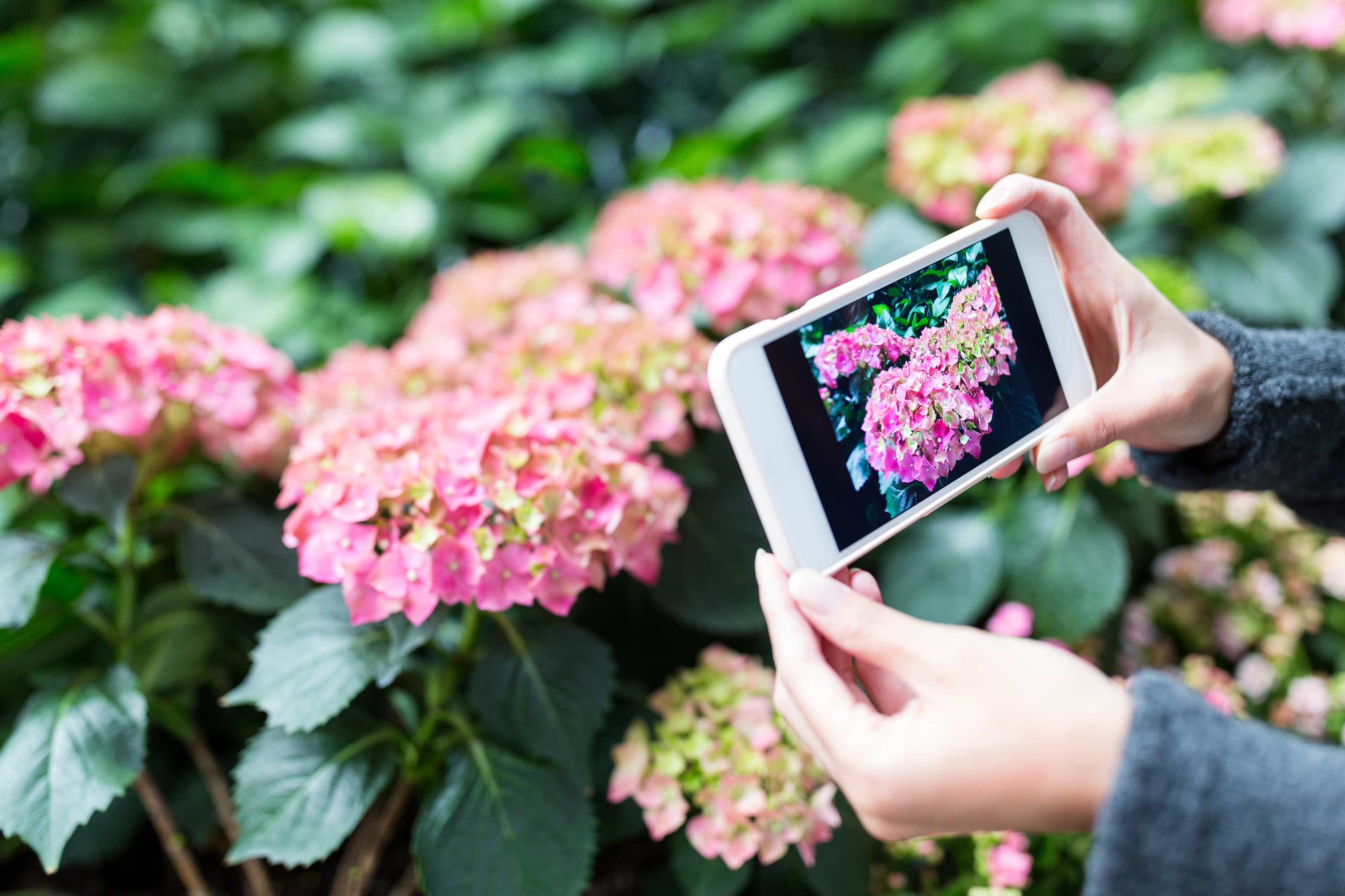 apps | apps that identify plants | flowers | plants | phones | how to | how to identify plants
