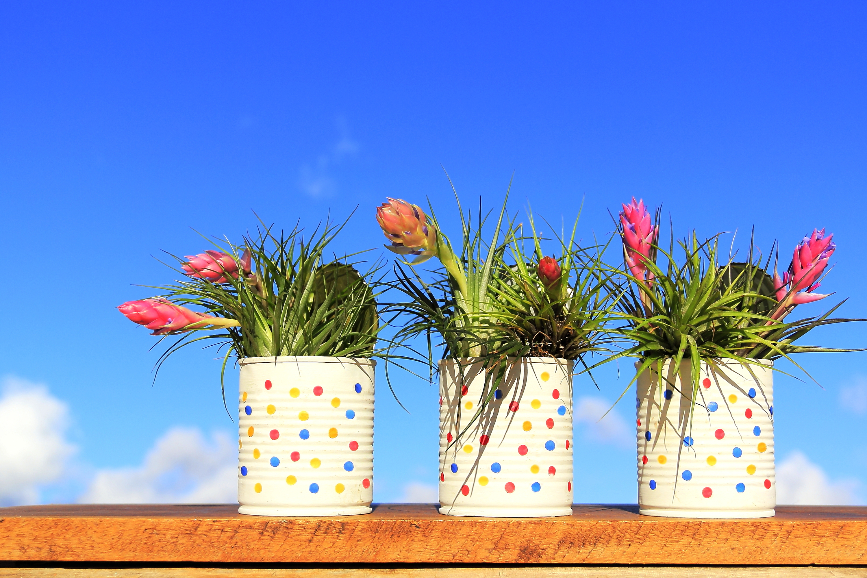 paint can | paint can containers | container gardening | gardening | diy paint can containers | diy