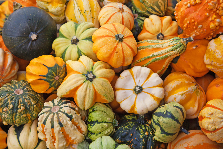 September | fall | fall gardening | gardening | gardening tips | fall gardening tips