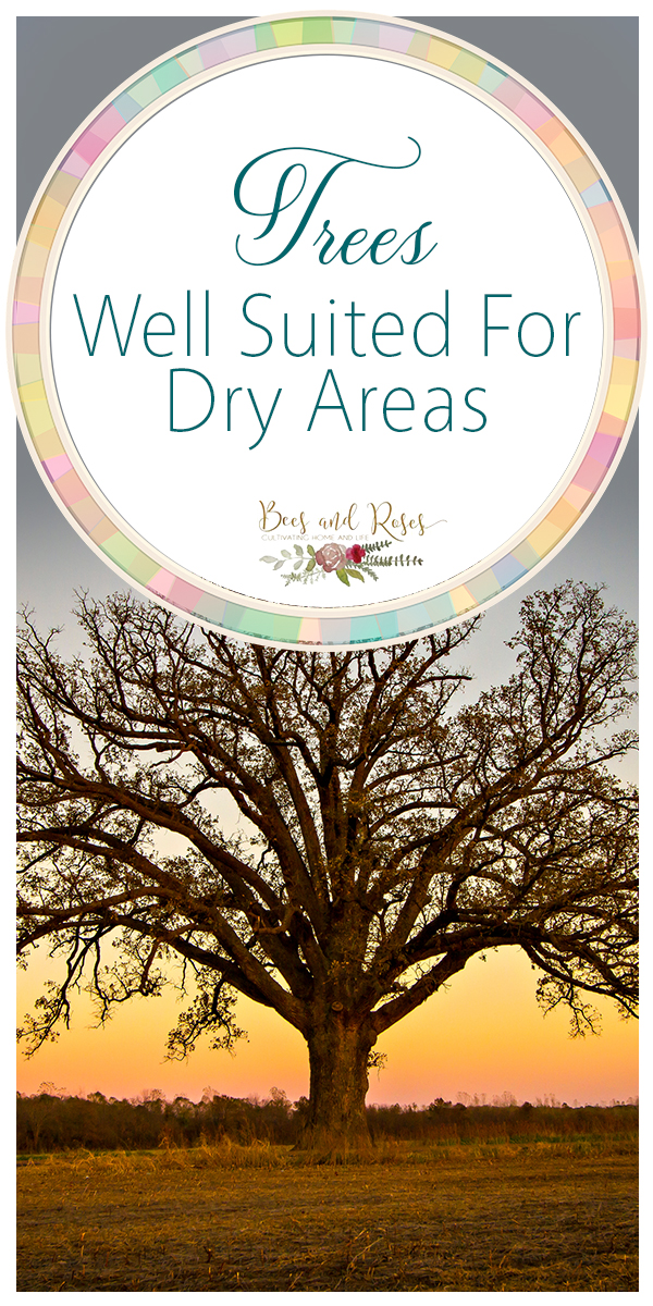 trees well suited for dry areas | trees | dry climate | gardening | gardening in a dry climate | trees that do well in dry climates