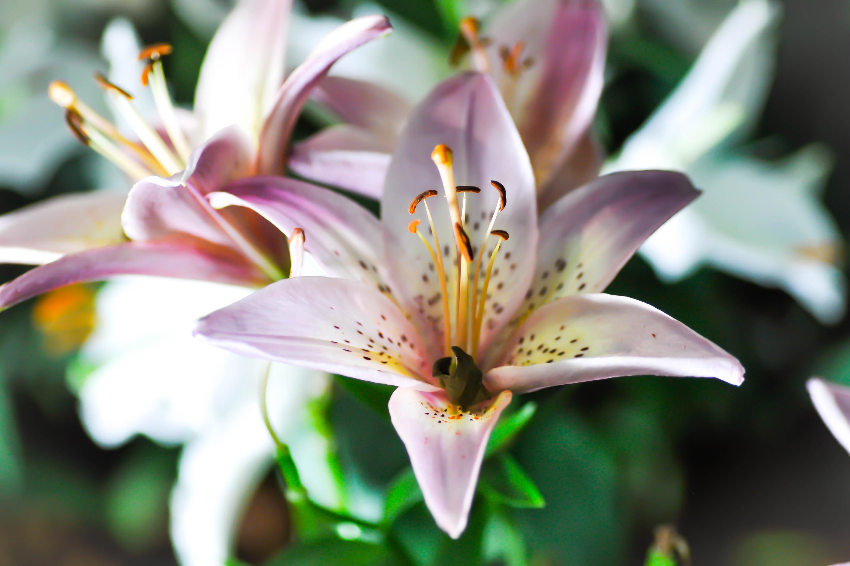 bulbs you should plant in fall | bulbs | fall | fall gardening | gardening | flowers